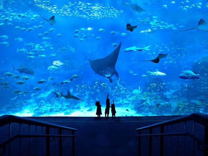 Enjoy Your Spring in S.E.A. Aquarium™ in Singapore